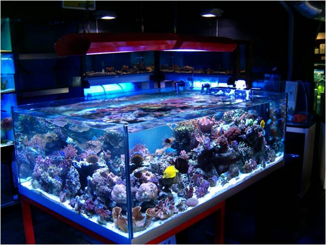 Aquarium Led Lighting On Winlights Com Deluxe Interior