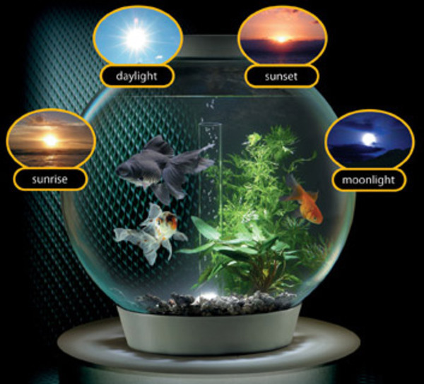 Fish aquarium light on deluxe interior for Fish tank lighting