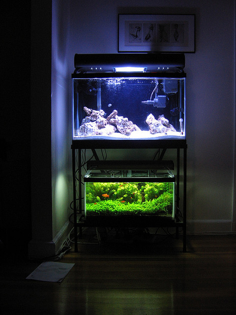... Aquarium Light Lighting For A Saltwater Aquarium Saltwater Aquarium