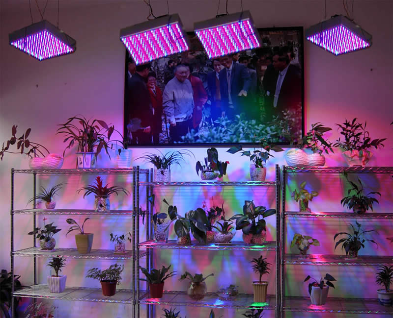 Plant Grow Light Stands On Winlights Com Deluxe Interior