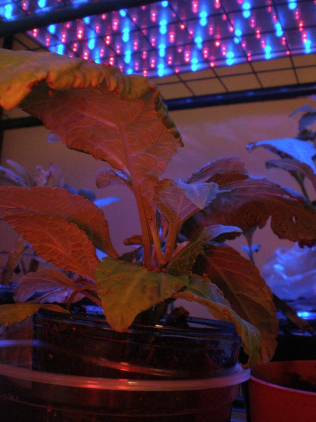 Under Which Light Do Plants Grow Best On Winlights Com